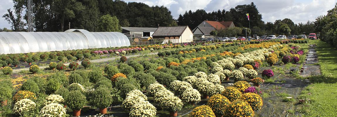 Gartenbaubetrieb Volker Deifuß